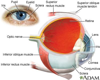 Eye Emergencies Penn Medicine